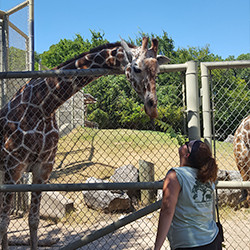 Female IU East student greeting a giraffe during her internship at a zoo.