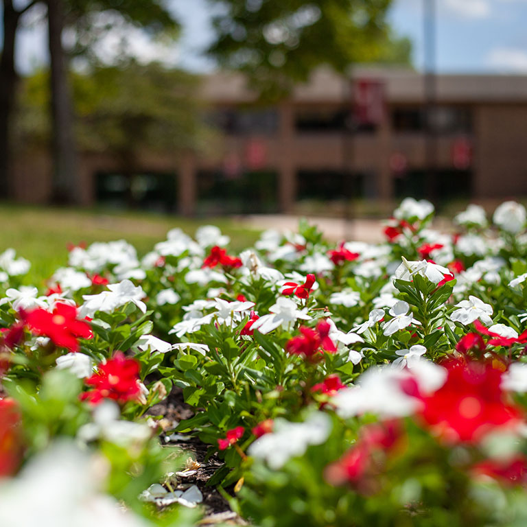 Red and white flowers on the Whitewater Hall walkway.